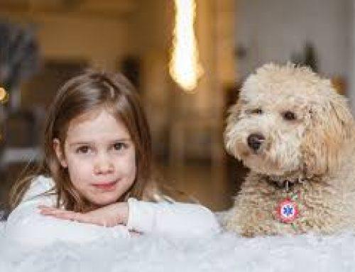 Hivatalosan is munkába állt Keksz, az első vércukorszint-jelző kutya