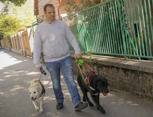 Amikor a vakvezető kutya két vakot vezet…
